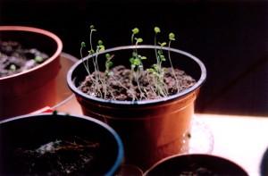 plant grow